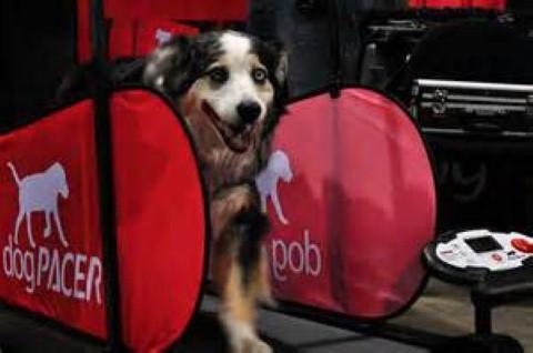 a dog on a treadmill